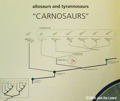 Both Allosaurus and Tyrannosaurus are in this group, but Allosaurus branched off because it had three fingered hand.