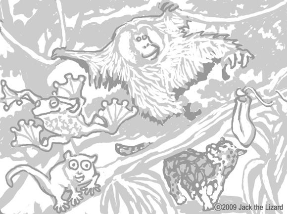 Coloring Pages of Borneo Rainforest