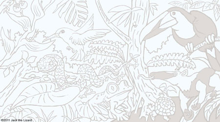 Coloring Pages of Central American Wildlife