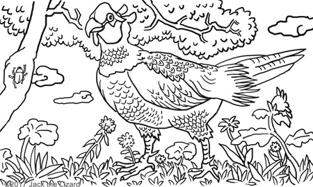 Coloring Pages of Green Pheasant