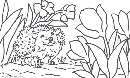 Coloring Pages of Hedgehog