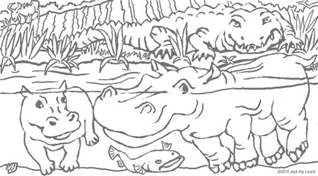 Coloring Pages of the Hippopotamus