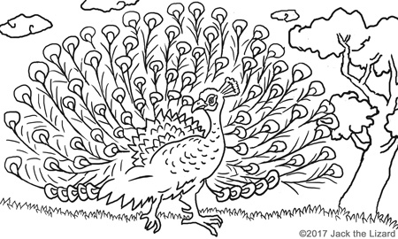 Coloring Pages of Peafowl