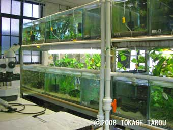 Conservation Breeding Room