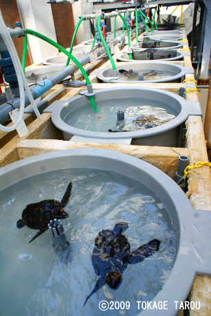 Turtle Breeding Research Centre in Port of Nagoya Public Aquarium