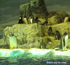 Penguin Pool, Port of Nagoya Public Aquarium