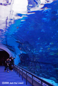 Under the sea tunnel, Port of Nagoya Public Aquarium