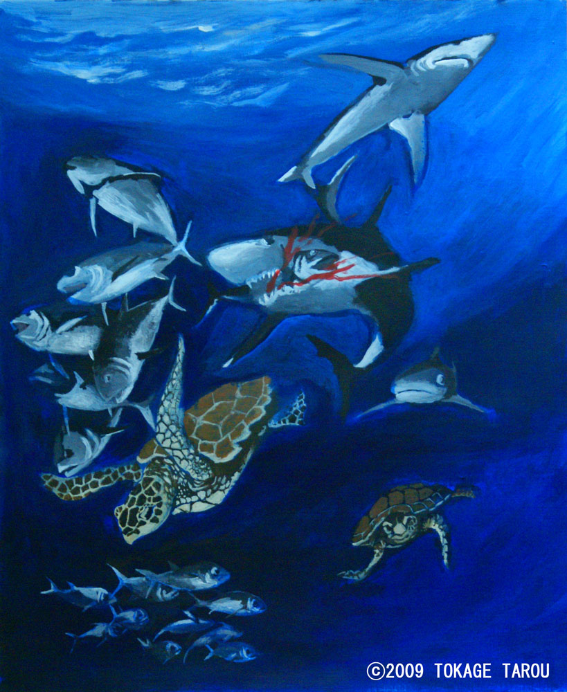 Sea turtle, sharks, bigeye tuna, swordfish
