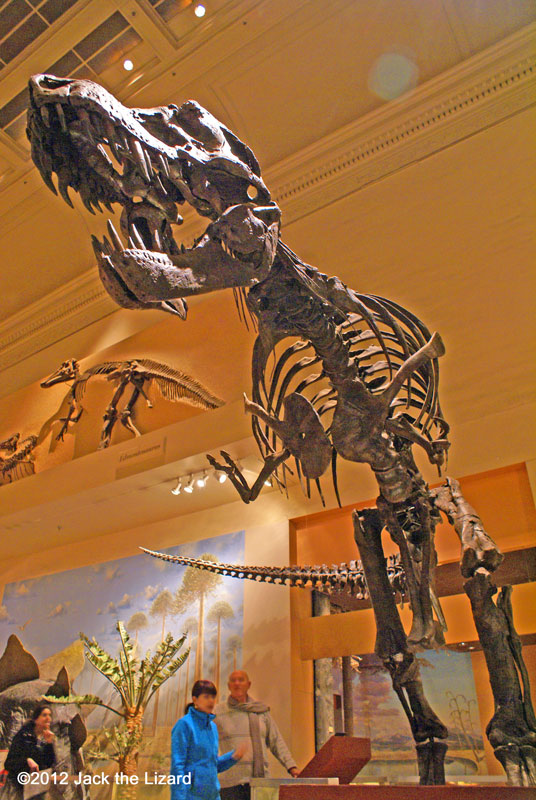 Tyrannosaurus rex, National Museum of Natural History