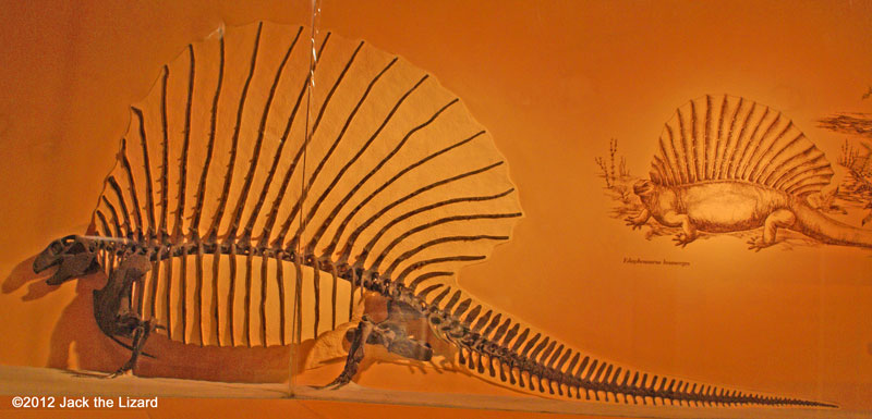 Edaphosaurus, National Museum of Natural History