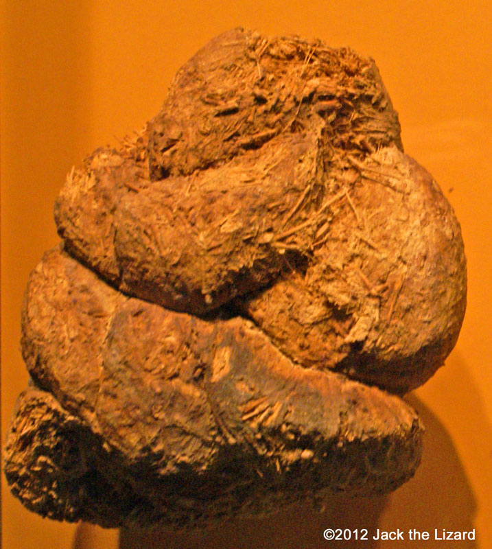 Giant Ground Sloth dung, National Museum of Natural Museum