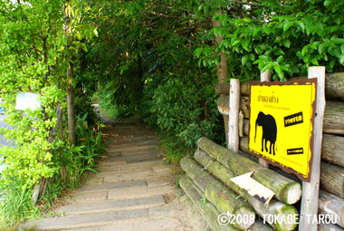Let's go see the elephants!, Tennoji Zoo