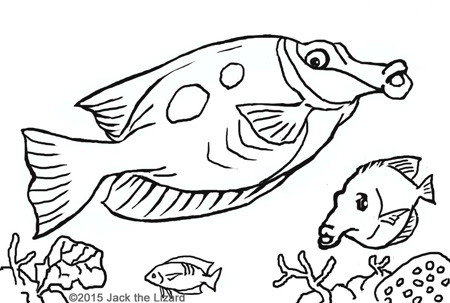 Coloring Pages of Blotched Foxface