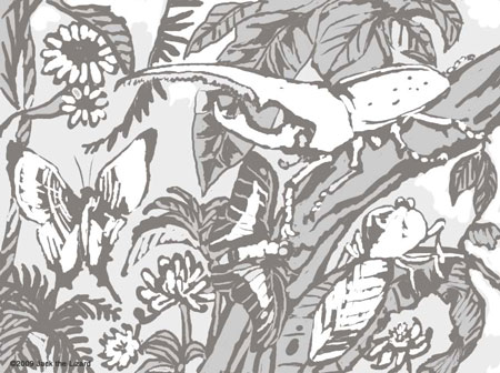 Coloring Pages of the Rainforest in Costa Rica