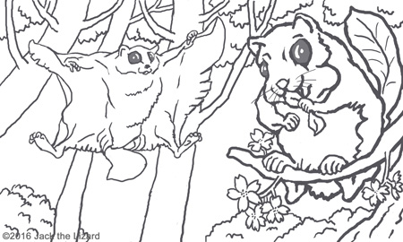 Coloring Pages of Flying Squirrel