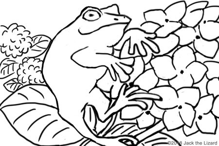 Coloring Pages of Frog and Hydrangea