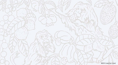 Coloring Pages of Golden Lion Tamarin