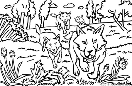Coloring Pages of Gray Wolf