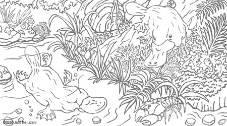 Coloring Pages of the Platypus