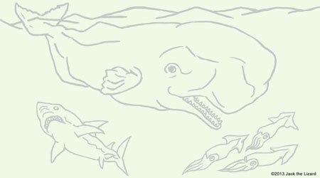 Coloring Pages of Sperm Whale