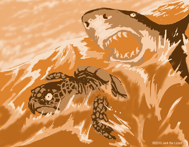 Sea Turtle and Shark